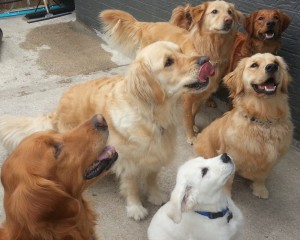 Pot of Goldens e1385951068325 300x240 About Us